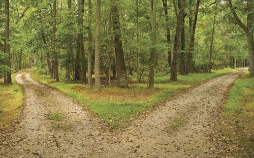 Diverging Paths.jpg